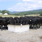 Gravity Water Trough