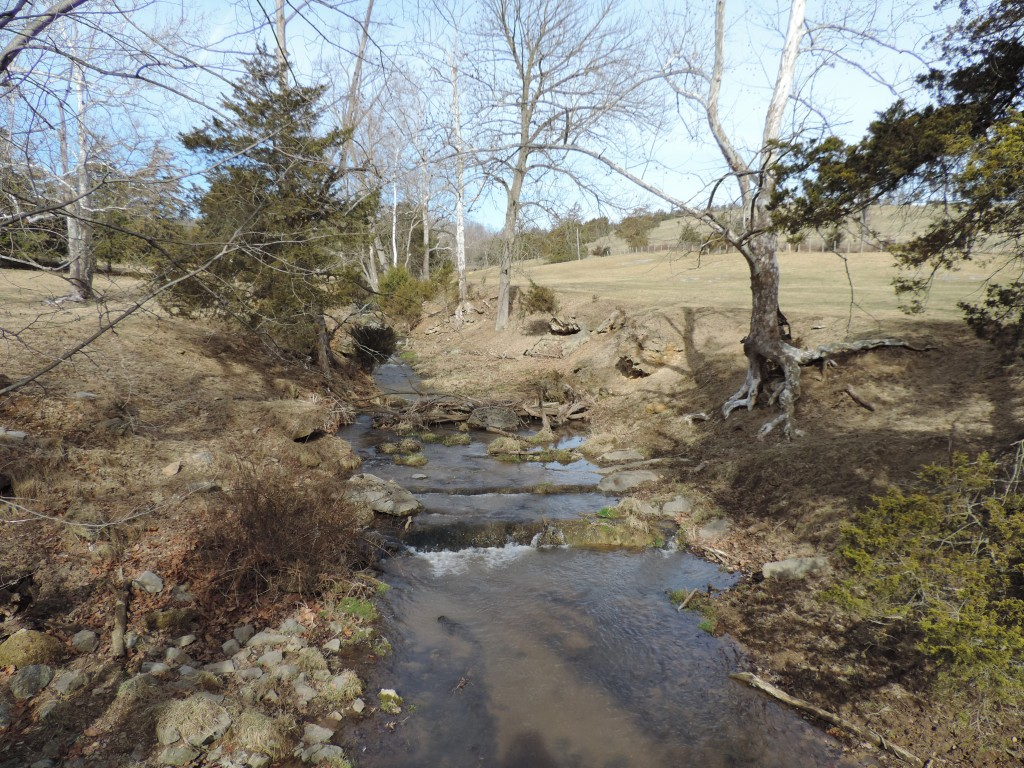 Linville Creek tributary-Tide Spring